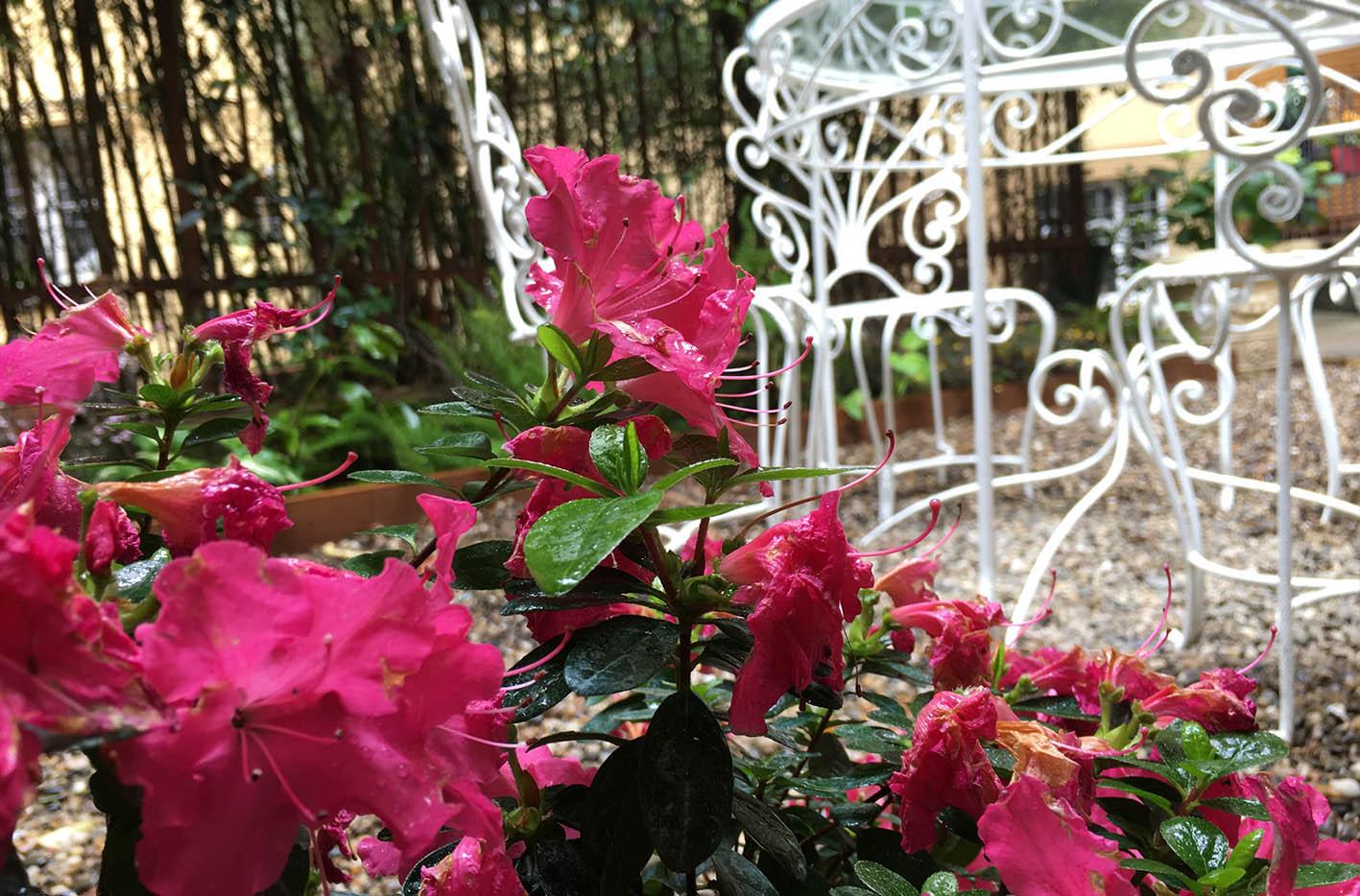 Progettazione giardino Genova (1)