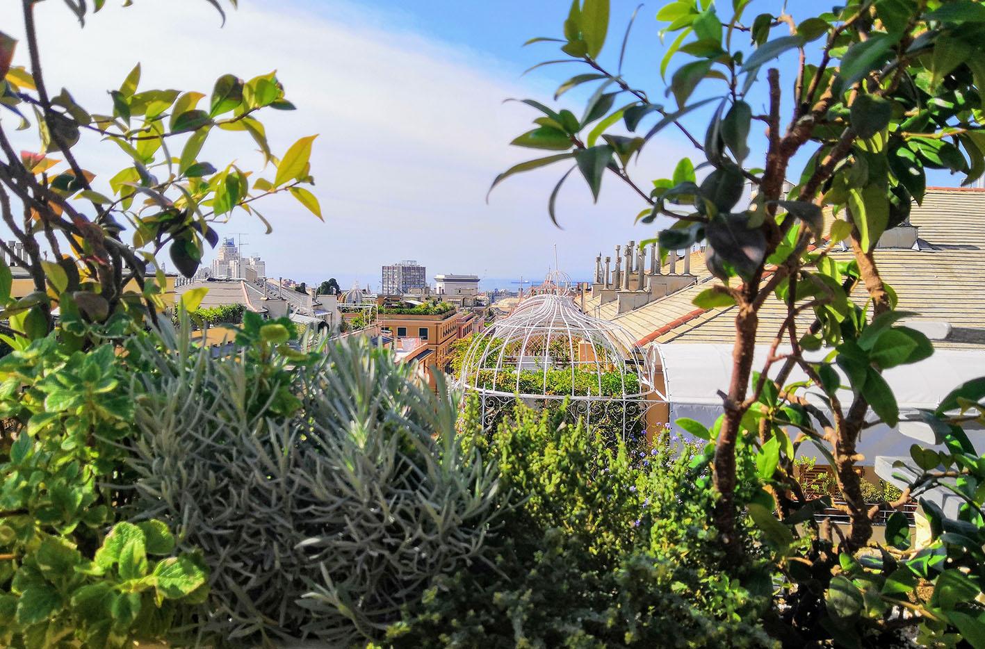 Terrazzo Genova _Profumi e colori