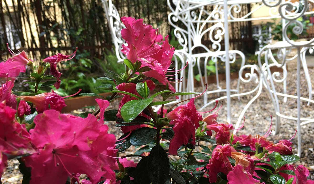 Progettazione giardino fiorito