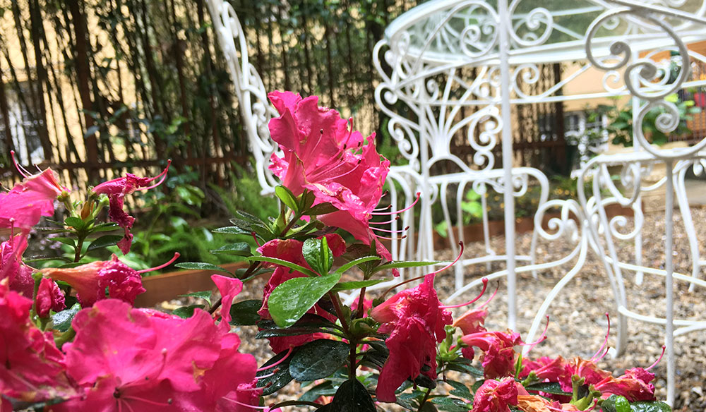 Giardino romantico fiorito